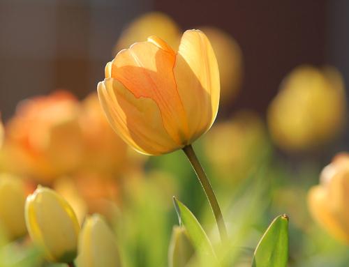 Was darf's denn sein: Liebe, Dankbarkeit, Freundlichkeit oder Zärtlichkeit?